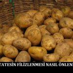 Patatesin Filizlenmesi Nasıl Önlenir